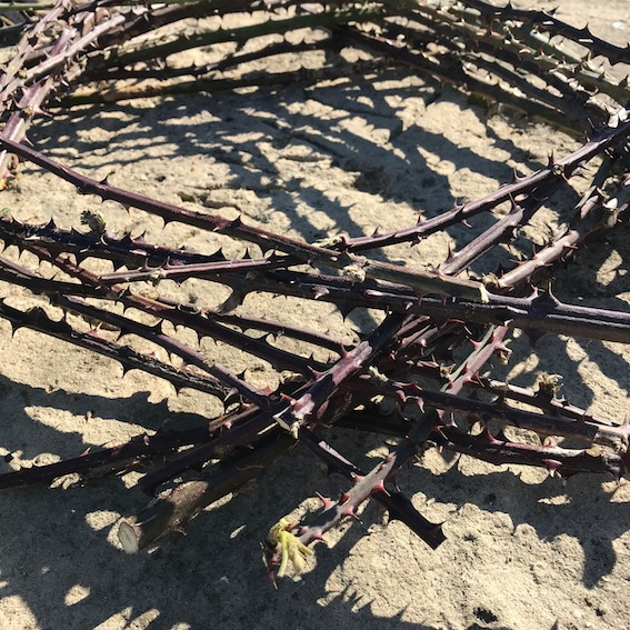 structure made from thorny sticks