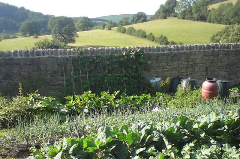 Rows of plants in an unofficial allotment in a countryside setting