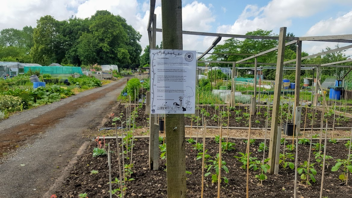 Plants growing in an allotment